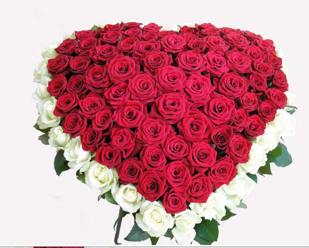 Фото товара 101 роза сердцем - красная, белая