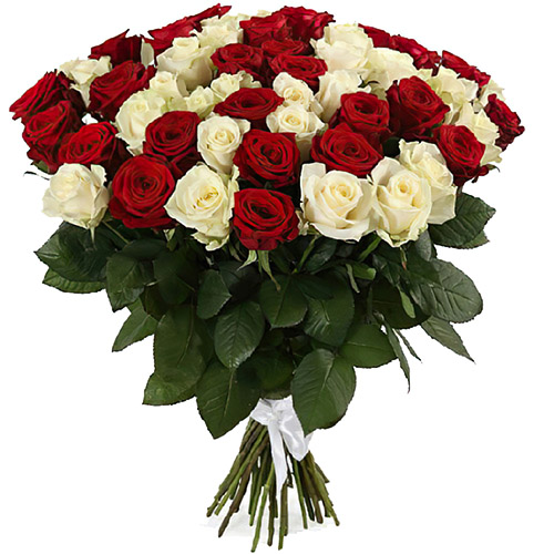 51 роза красная и белая фото